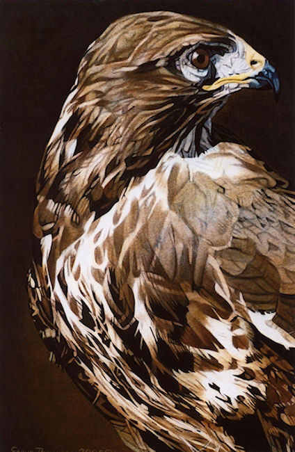 Beauty-2-Buzzard-72dpi