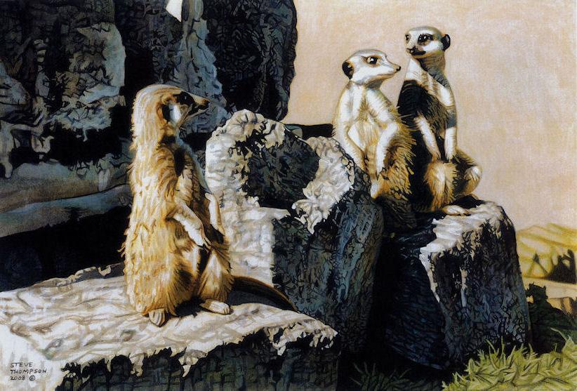 conversing meerkats