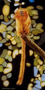 golden lion tamarind