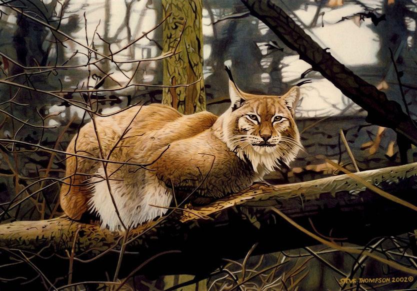 grumpy lynx