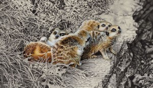 meerkats at play