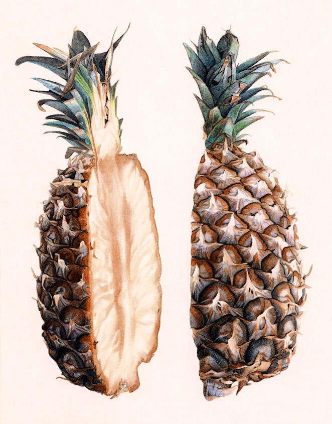 pineapple cross section