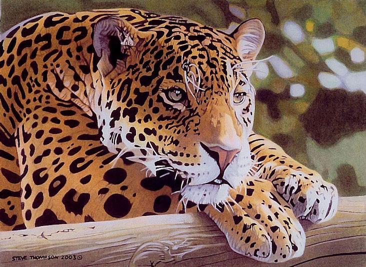 reflection jaguar