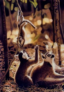 ring tailed lemurs at play