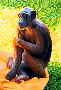 sally chimpanzee