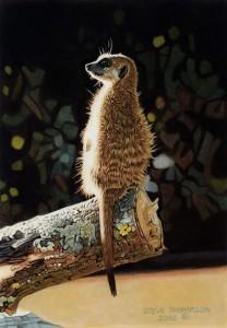 sentry meerkat