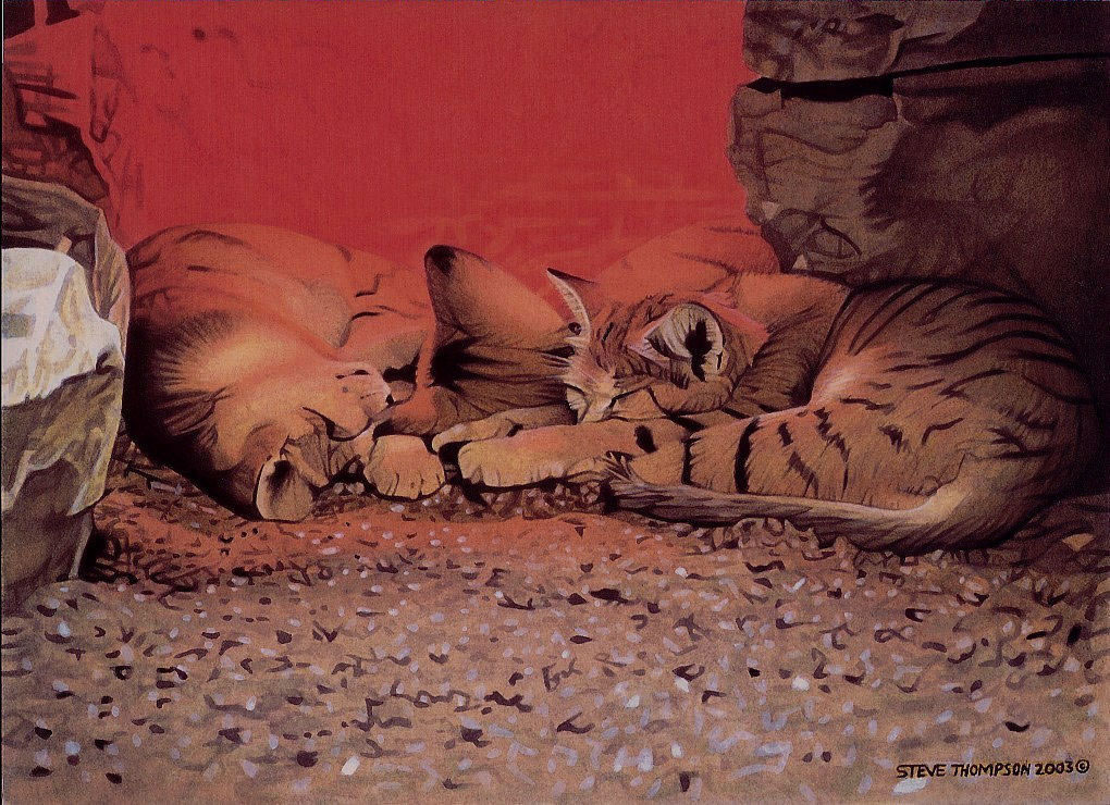 sleeping sandcats