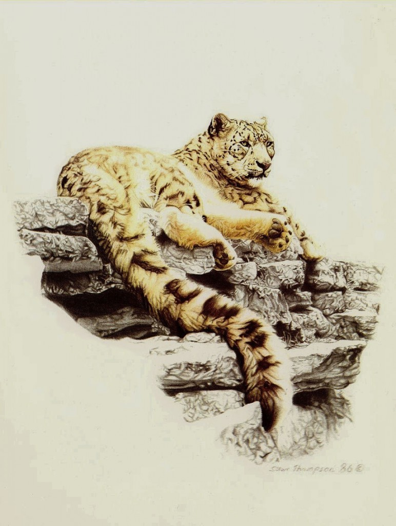 study of snow leopard